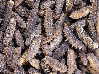海参的口感和营养价值有多大关系?
